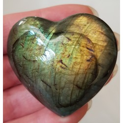 Labradoriet hart